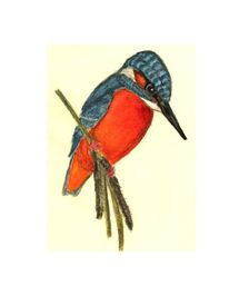 Vogel, Eisvogel, Aquarell