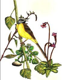 Singvogel, Gebirgsstelze, Vogel, Aquarell