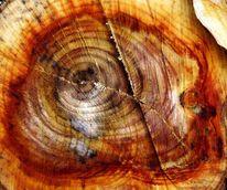 Baum, Mit blaufäulnis, Gefällte, Malerei