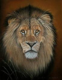 Tierzeichnung, Tierportrait, Tiere, Löwe