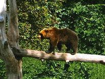 Braunbär, Baumstamm, Balanceakt, Bär