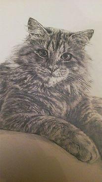 Katze, Bleistiftzeichnung, Zeichnung, Portrait