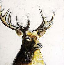 Braun, Tiere, Gelb, Wald