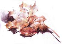 Herbst blätter, Zeichnungen, Stillleben