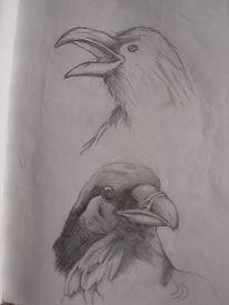Zeichnung, Tiere, Vogel, Rabe