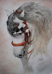 Pferdekopf, Pferde, Dressur, Reiten