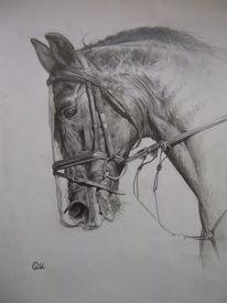 Zeichnung, Reiten, Rappe, Portrait