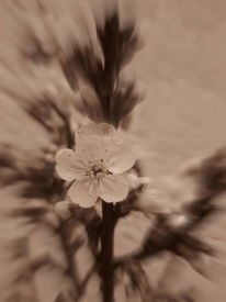 Fotografie, Blumen