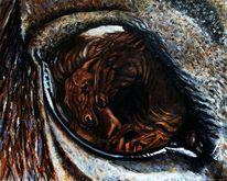 Augen, Pferde, Sehen, Pferdeaugenblick