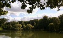 Himmel, Grün, Blätter, See
