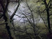 Dramatisch, Winter, Fotografie, Düster