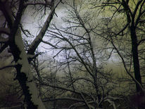 Winter, Fotografie, Baum, Düster
