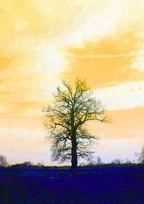 Baum, Winter, Schwarz, Blau