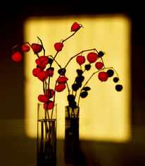 Schatten, Blumen, Fotografie, Malerei