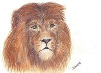 Tiere, Portrait, Löwe, Tierzeichnung