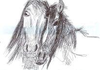 Pferde, Kopf, Zeichnungen