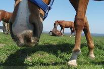 Freundschaft, Neugier, Augenblick, Pferde