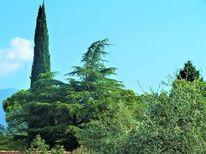 Baum, Zypresse, Landschaft, Gardasee