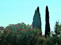 Baum, Zypressen, Gardasee, Landschaft