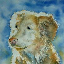 Aquarellmalerei, Augen, Hund, Hundeaugen