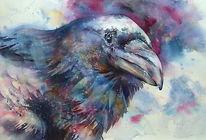 Rabe, Aquarellmalerei, Vogel, Aquarell