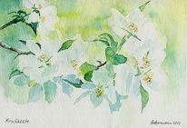 Kirsche, Blumen, Blüte, Aquarell watercolor