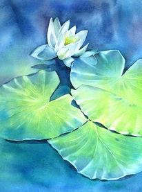 Lily pads, Seerosen, Rosen, water lily