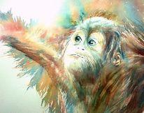 Persönlichkeit, Orang utan, Affe, Tiere