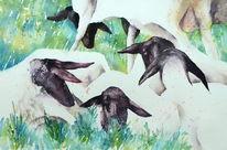 Rhönschaf, Schaf, Aquarellmalerei, Tiere