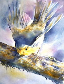 Rouge, Singvogel, Gorge, Aquarellmalerei