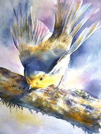 Singvogel, Rouge, Gorge, Aquarellmalerei