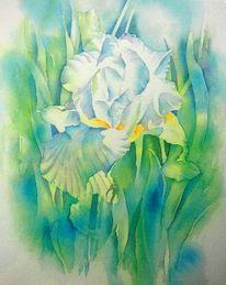 Blumen, Aquarellmalerei, Schwertlilie, Weiß