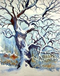 Eiche, Winter, Aquarellmalerei, Baum