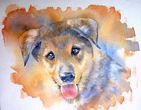 Hund, Aquarellmalerei, Portrait, Hundeportrait