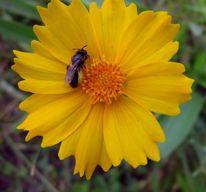 Pflanzen, Natur, Blumen, Insekten