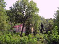 Natur, Haus, Wald, Fotografie