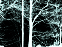 Digitale kunst, Nacht, Wald