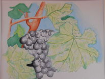Wein, Aquarellmalerei, Pflanzen, Aquarell