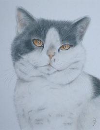 Katze, Kreide, Naturgetreu, Tierportrait