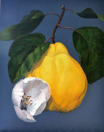 Weiß, Ölmalerei, Blätter, Quittenblüte