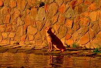Tiere, Landschaft, Ausdruck, Fotografie