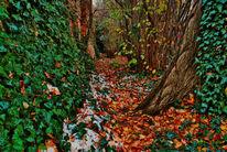 Landschaft, Pflanzen, Realismus, Fotografie