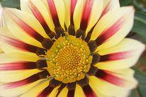 Fotografie, Pflanzen, Blumen