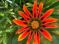 Pflanzen, Fotografie, Blumen