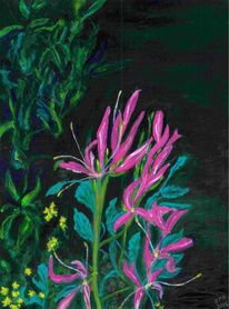 Nachtschattengewächse, Pflanzen, Lila, Grün