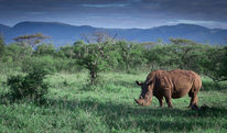 Berge, Breitmaulnashorn, Afrika, Safari