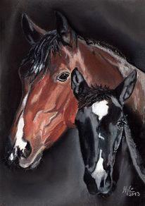 Liebe, Augen, Pferdeportrait, Stute mit fohlen