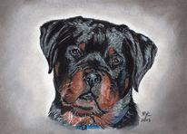Hundeportrait, Portrait, Rottweiler, Hund