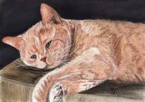 Portrait, Katze, Zeichnung, Pastellmalerei