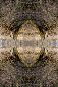 Loch, Wald, Tiere, Spiegelung